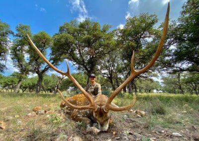 ccc-ranch-axis-deer